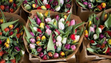Прибыльный цветочный бизнес в Голландии — сезон тюльпанов открыт