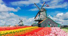 Теперь работа для трудовых мигрантов в Голландии, ближе на 15 недель
